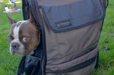 Meet Timbuk2's Muttmover Backpack: Travel With Your Small Dog in Style