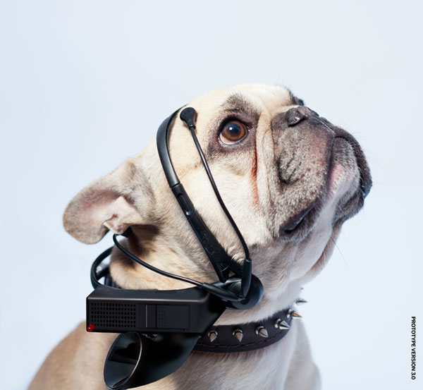Will Crowdfunding Get You a Talking Dog? Probably Not