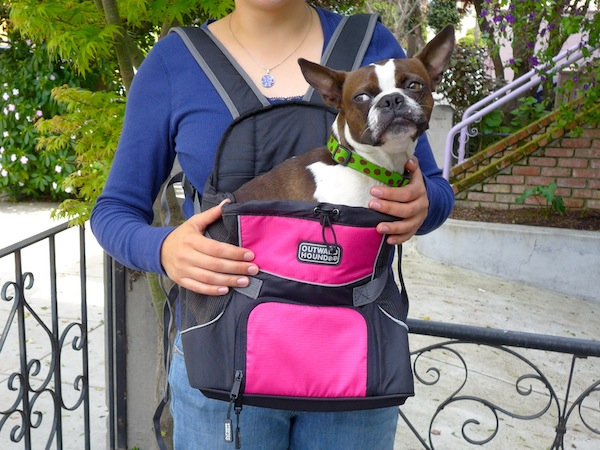 We Review The Pet A Roo Pet Carrier By Outward Hound