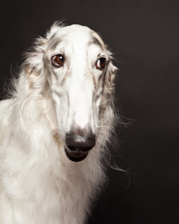"""Fashion Photographer Paul Nathan Talks About His Latest Dog Book, """"Groomed"""""""