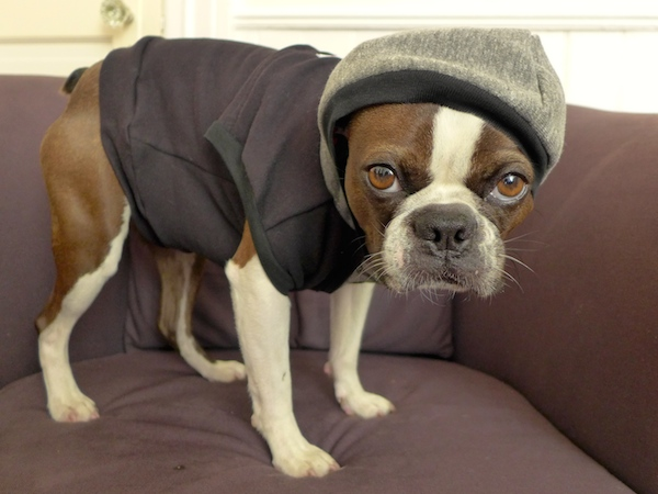 Dogster Reviews Stylish Summer Dog Shirts by Penn + Pooch