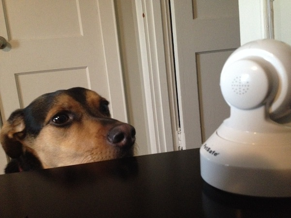 Win a SocialPet Camera and Treat Dispenser System