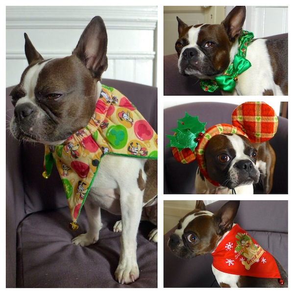 Check Out Holiday Dog Toys and Apparel at PetSmart