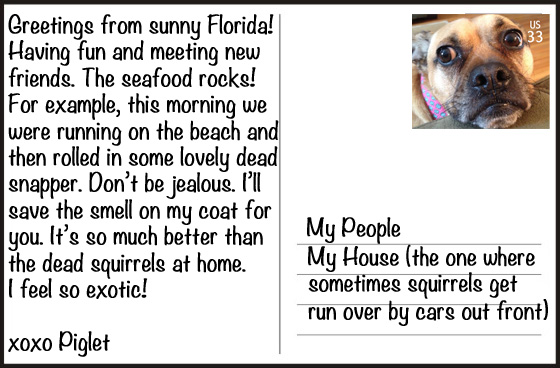 My dog went on vacation and sent me these postcards my dog went on vacation and sent me these postcards m4hsunfo