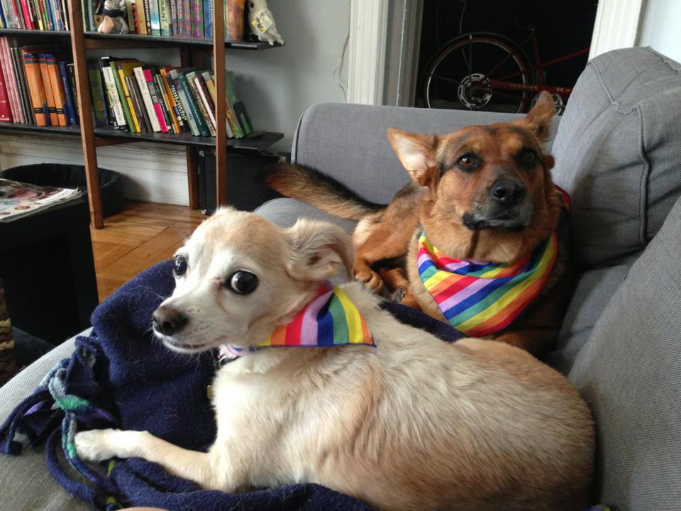 The American Kennel Club Protests Russian Homophobia