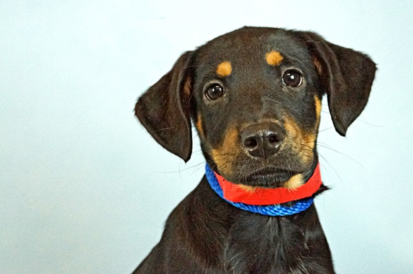 Fort Lauderdale Humane Society Dogs
