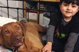 Are Rescue Groups Too Strict in Screening Potential Adopters?