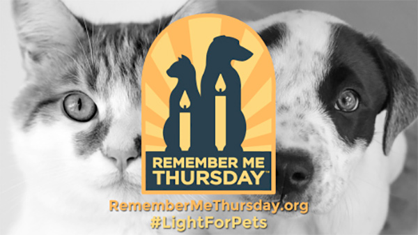 Remember Me Thursday: Honor Your Pets and the Ones Who Never Got Out of Shelters
