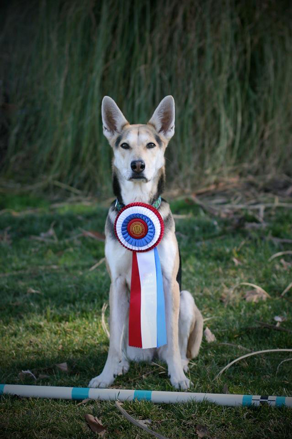 Mixed-Breed Dog Makes Top Five at Westminster Dog Show