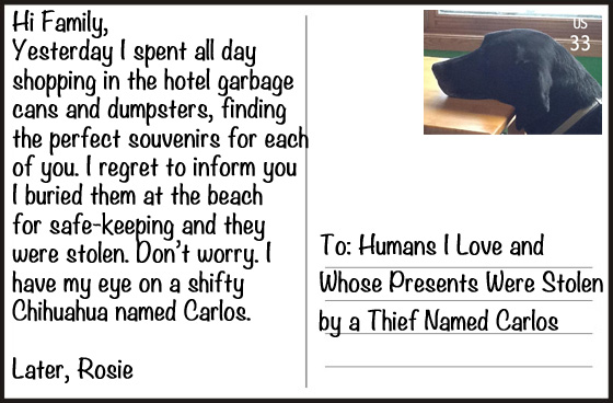 My Dog Went On Vacation -- And Sent Me These Postcards