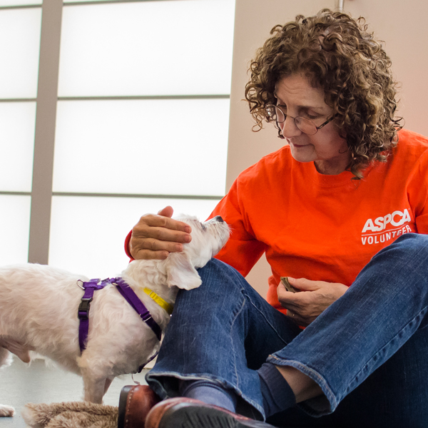 What It Takes to Be a Volunteer at a Dog Shelter
