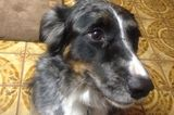 Do You Talk to Your Dog Like She's Human?