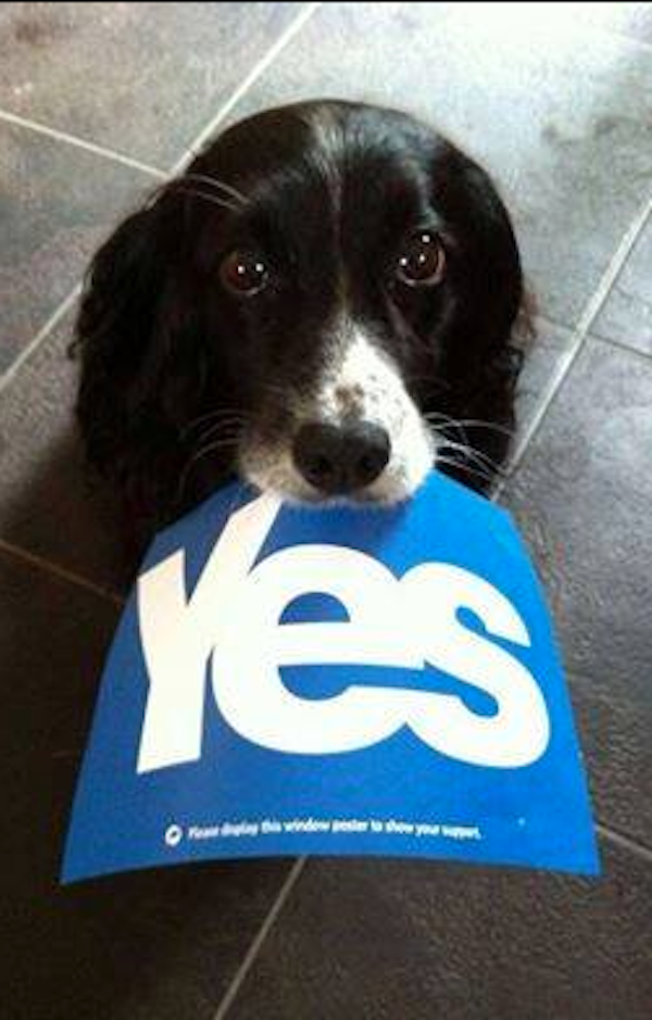 Dogs Tell Us How they Really Feel About Scottish Independence