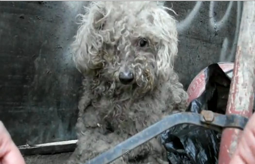 Video We Love: The Tender Rescue of a Blind Dog Living in a Garbage Pile