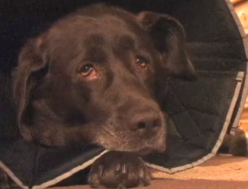 Justice at Last: Owners of Dog Shot by Deputy Awarded $620,000 by Jury