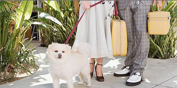 Eight Pet-Friendly Hotels for Dogs Who Like to Travel in Style