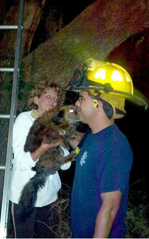 Stranger Than Fiction: South Carolina Firefighters Rescue a Dog Stuck Up a Tree