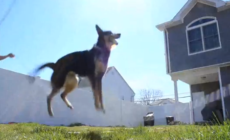 Viral Video We Love: Double-Dutch Dog Blows Your Mind