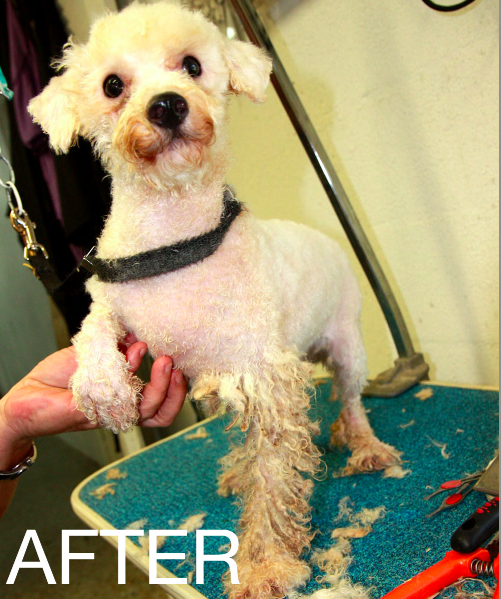 Puppy Mill Dogs: Before-and-After Photos