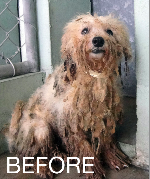 Puppy Mill Dogs Before And After Photos
