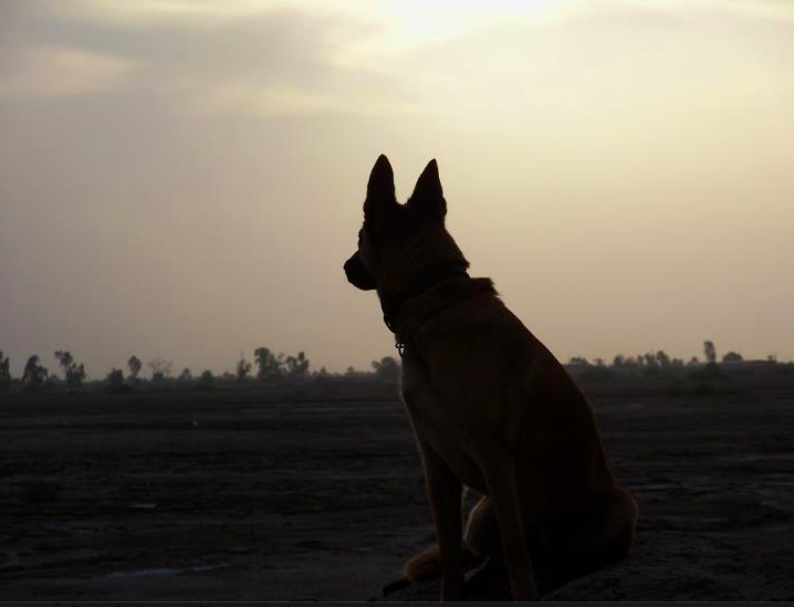 A Memorial Day Tribute to Military Dogs