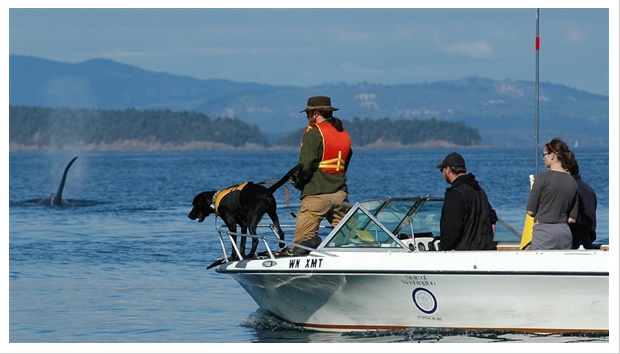 Tucker the Lab Sniffs Out Whale Poop: The Best Dog Job EVER