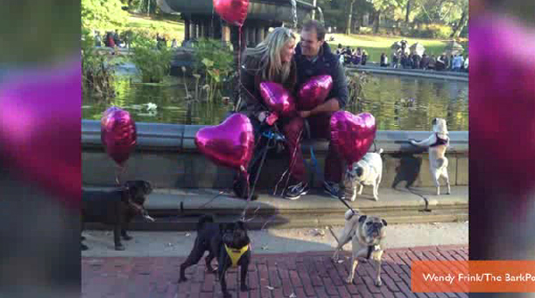 """Puppy Proposal: Sometimes, 15 French Bulldogs Are Necessary to Get Her to Say """"Yes"""""""