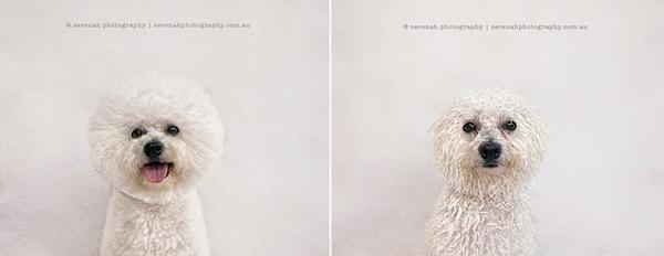 Serenah-Photography-1