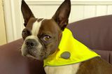 Dogster Reviews: Reflective Safety Gear from Spot the Dog