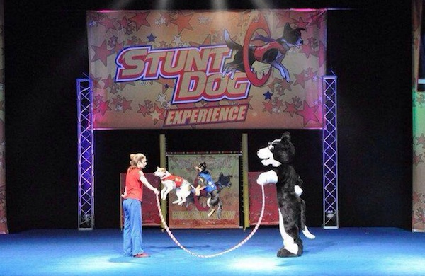 Meet the Daredevil Canines of Stunt Dog Productions
