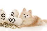 Let These Dogs Show You How to Celebrate Tax Day