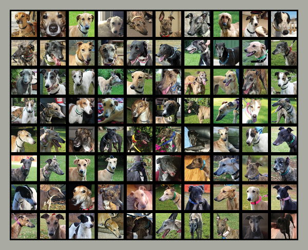 All the dogs adopted through Northern Sky between January and December 2014.