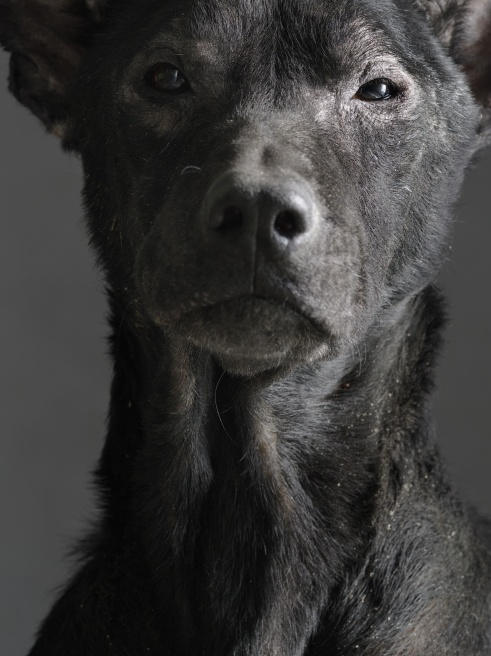 Photographer Tou Chih-Kang Captures Dogs on Death Row