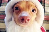 The 12 Dogs of Christmas: Tuna