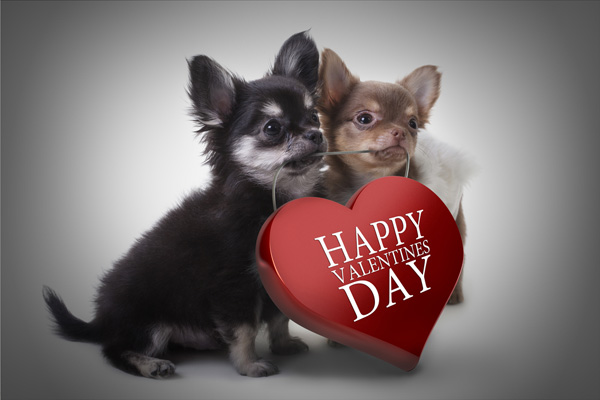 6 valentine 39 s day conversation hearts from the dog - Valentines day pictures with puppies ...