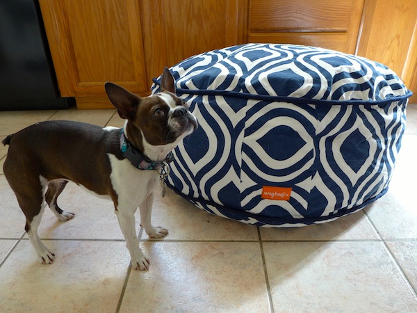 Dogster Reviews We Give The Wagbagzzz Pet Bed A Whirl