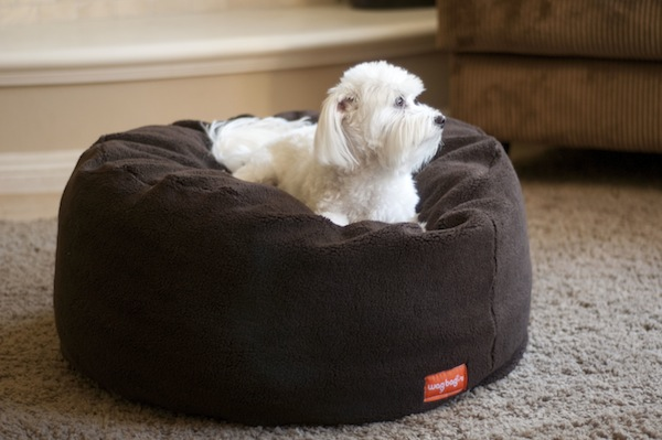 Dogster Reviews: We Give the WagBagzzz Pet Bed a Whirl