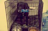 Meet the Labrador Retrievers Who Safeguard the U.N.