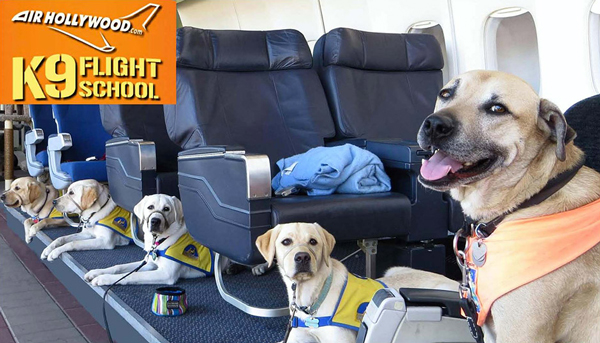 Is Your Dog Scared of Airports and Planes? Fly Air Hollywood!