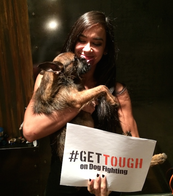 #GetTough on Dog Fighting With the ASPCA
