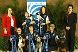 What It's Like to Compete in the AKC National Agility Invitational