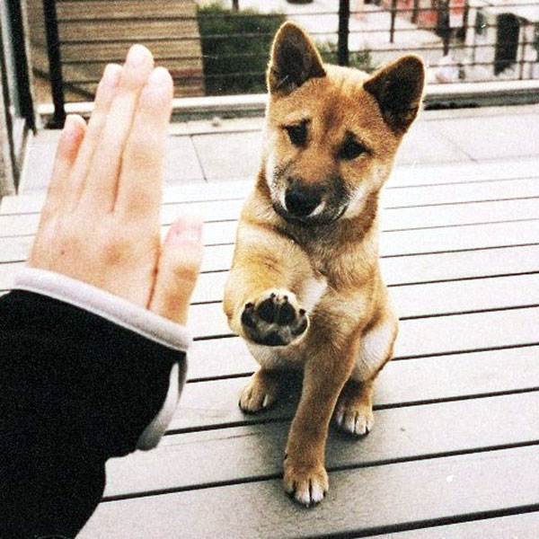 Find Your Joy With These Akita Puppy Pictures