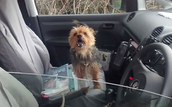 100 Miles From Home, a Stolen Dog Flags Down RSPCA for a Ride