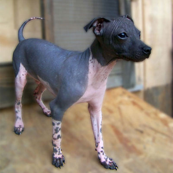 It's National Nude Day — We Celebrate With Hairless Dogs!
