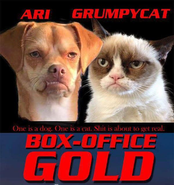 Caption: At Go Dog Safe Paws, volunteers think Ari looks more like Grumpy Cat. They even made a movie poster for a team-up between the two. Image via Go Dog Safe Paws