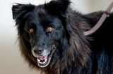 Brightly Colored Eyes Have Kept This Dog in Shelters 7 Years