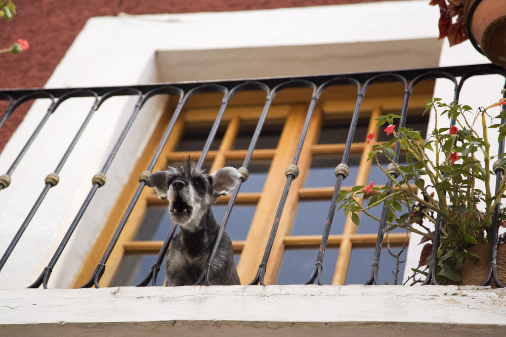 Dogster Debate: Why Do People Deliberately Poison Dogs?
