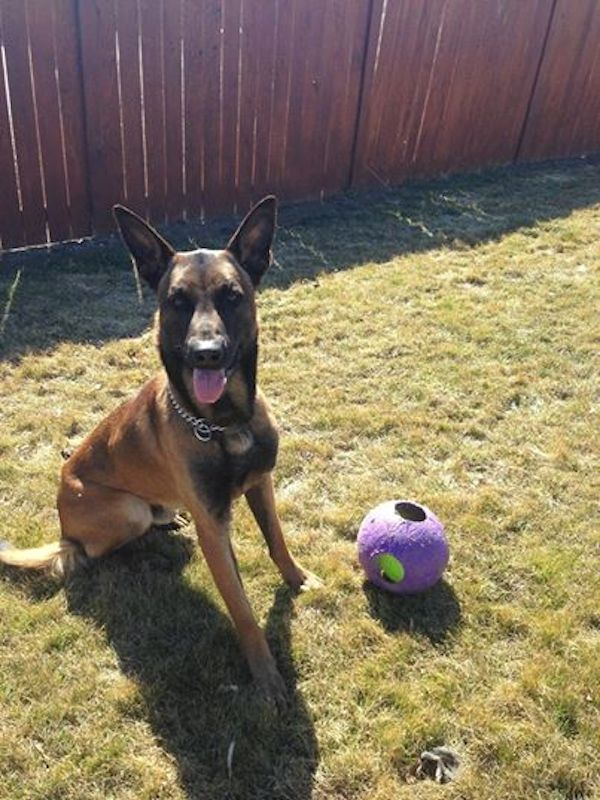 K9 Deputy Basco Is a Facebook Star