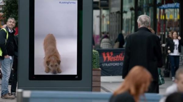 battersea-dog-1