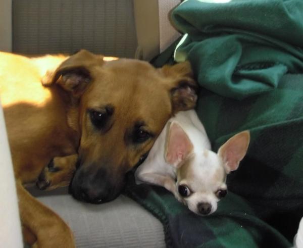 MBJungle Raises Awareness About Dog Mental Illness